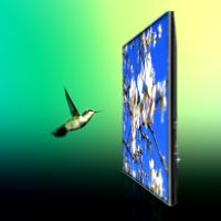 Hummingbird pic