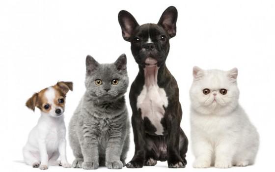 Advantix Cats And Dogs