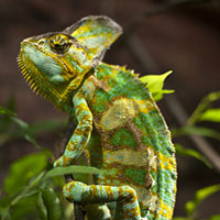 Preview for Writing to Potential Clients: Be the Chameleon