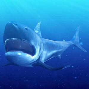 Shark pt3 retina