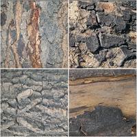 Thumb cg 3d textures freebie pack tree bark wood cracks