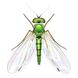0958 insect fly400