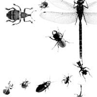 Bugs200