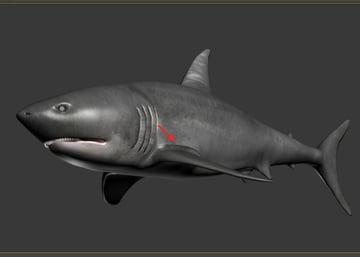 Shark_PT2_64
