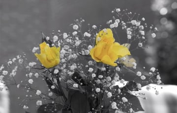 This particular effect of adding colour to a black & white photo is very popular.