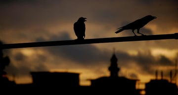 Image Credit: Shocked Crows by Niloy