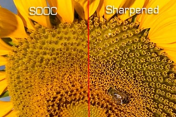 image focus and sharpness