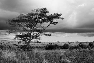 steven davis photography