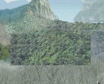 jungle-05 rereduplicated level adj layer