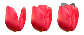 diana-tut-tulips mesh-22