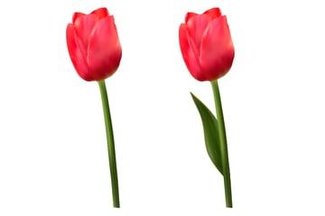 diana-tut-tulips mesh-29