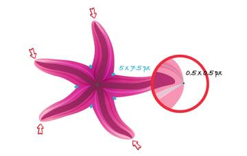 diana-QT-Starfish-13