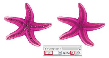 diana-QT-Starfish-25