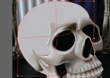 skull_10-3_braincase