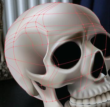 skull_10-4_braincase