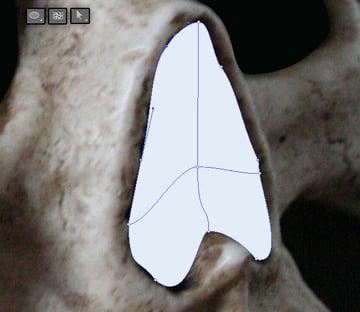 skull_3-6_nose