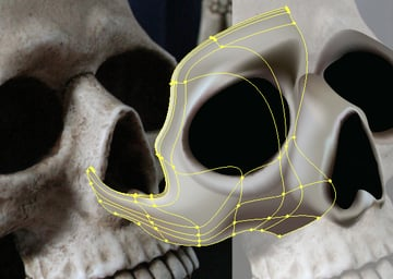 skull_6-3_cheek