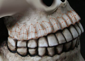 skull_7-4_upper_jaw