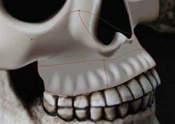 skull_7-6_upper_jaw