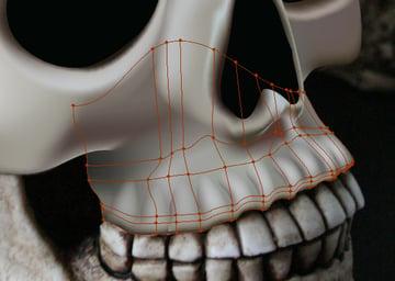 skull_7-7_upper_jaw