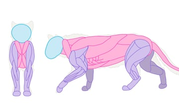 catdrawing_2-3_muscles