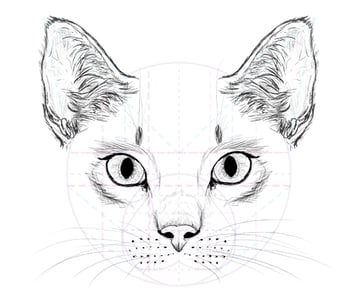 catdrawing_8-2_whiskers