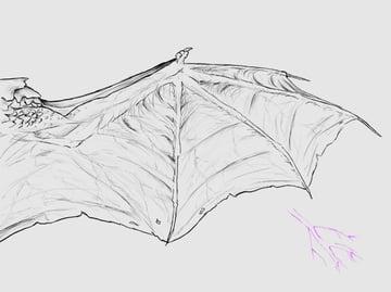 wings_3-8_dragonwing_veins