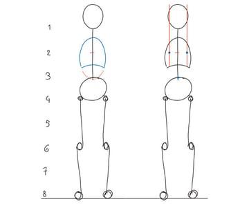 d- The torso