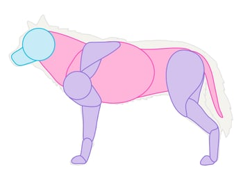drawingdogs_2-1_muscles_simplified