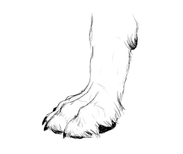 drawingdogs_3-6_paw_drawing