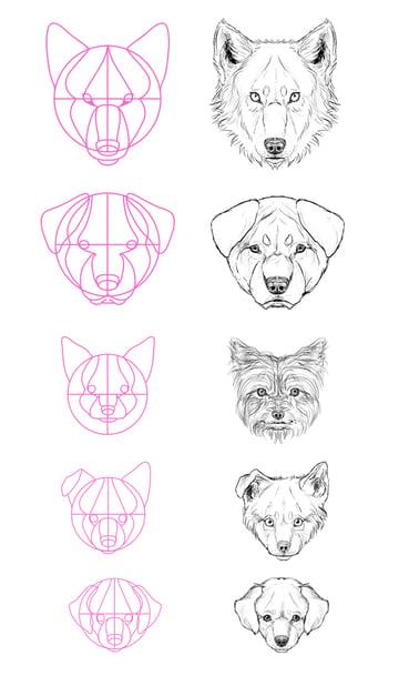 drawingdogs_4-13_head_profile