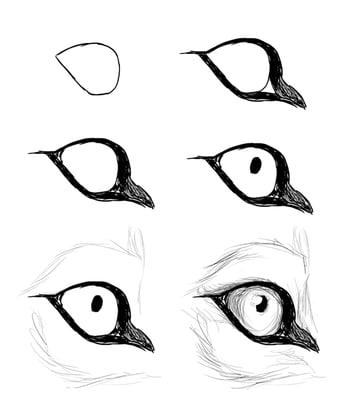 drawingdogs_5-7_eye_side