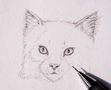 drawingfur_4-10_head_coats