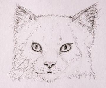 drawingfur_4-11_head_coats