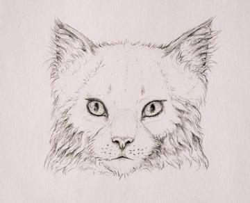 drawingfur_4-12_head_coats