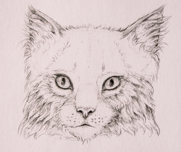 drawingfur_4-13_head_coats