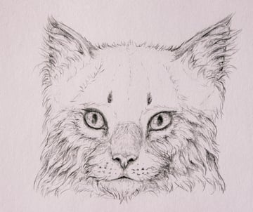 drawingfur_4-14_head_coats