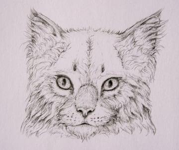 drawingfur_4-15_head_coats