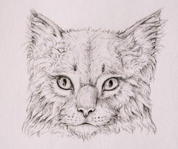 drawingfur_4-16_head_coats