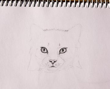 drawingfur_4-5_head_coats