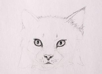drawingfur_4-6_head_ears