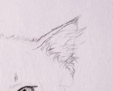 drawingfur_4-7_head_ears