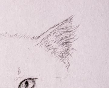 drawingfur_4-8_head_ears