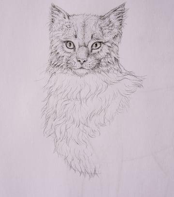 drawingfur_5-2_chest_coats
