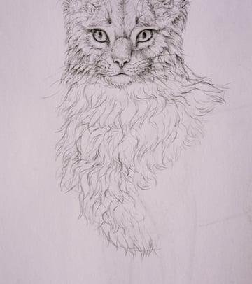 drawingfur_5-3_chest_coats