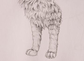 drawingfur_6-4_forelegs