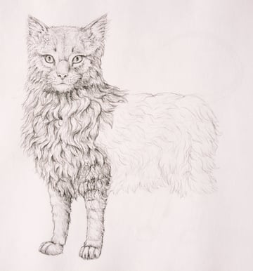 drawingfur_7-2_barrow