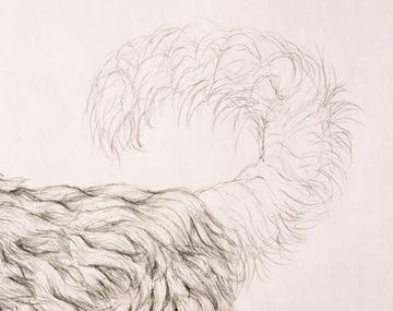 drawingfur_9-2_tail