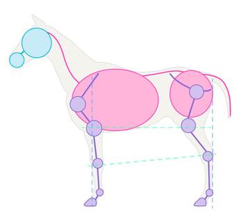 drawinghorse_1-2_skeleton_simplified