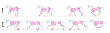 drawinghorse_2-4_gallop_canter_difference